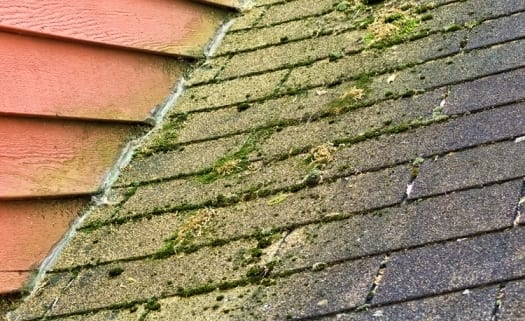 How To Clean Algae And Moss Off Asphalt Shingles Signature Home Inspection