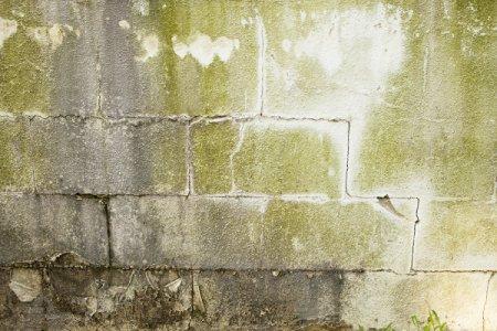 Mold on Basement Walls