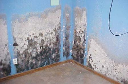 Mold Growing on Interior Walls