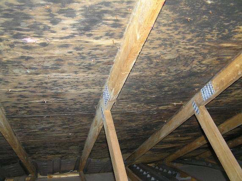Mold on Attic Framing