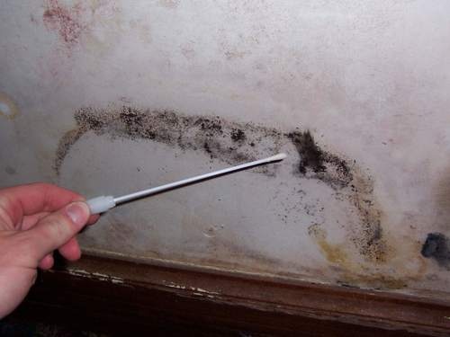 A Swab is Being Used To Collect Samples of Mold